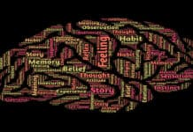 brain-feel-think-memory
