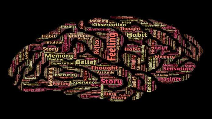 brain-feel-think-memory